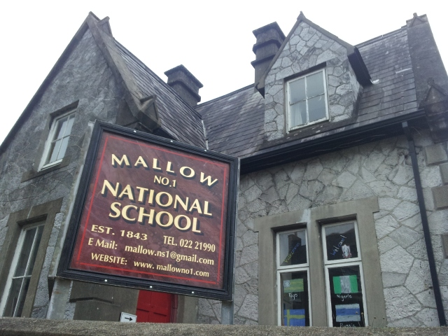 Mallow No1